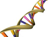 9: Nucleic Acids