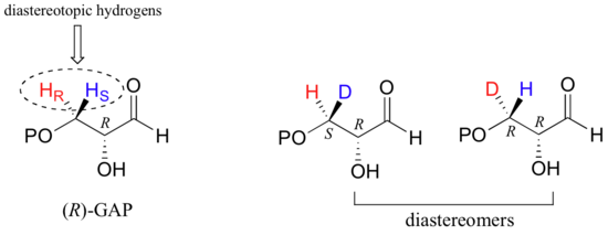 The diastereotopic hydrogens are circled. The diastereomers are S,R and R,R configuration.