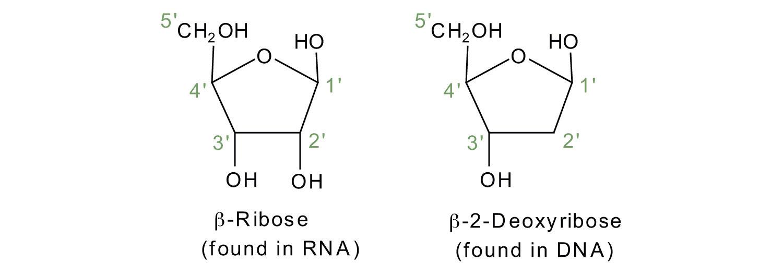 RNA, DNA.jpg